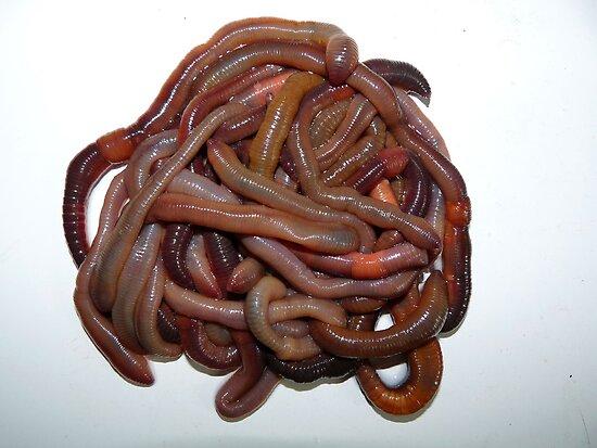 Pile O Worms by Marcia Rubin