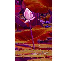 Lilypad Beauty Photographic Print