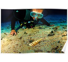 Diver with Auger Snail Poster