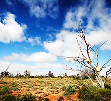Rock Trees, Outback South Australia by DanielleQ