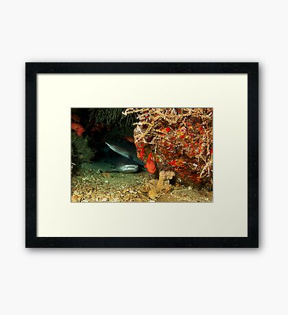 Shark Stink Eye Framed Print