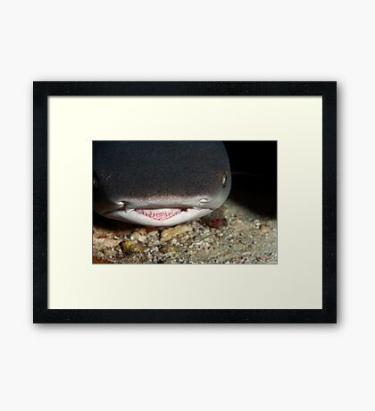 White Tip Reef Shark Framed Print