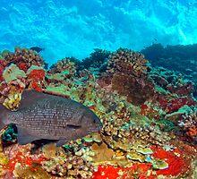 Rudder Fish by Greg Amptman