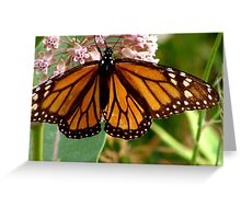Transluscent Monarch Greeting Card