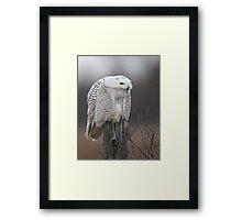 Silent Killer/Snowy Owl Framed Print