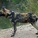 african wildlife by jozi1