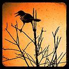 The Raven  by Brian David  Braun