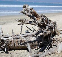 Driftwood by AvenueJ