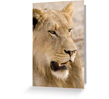 Juvenile Male Lion Greeting Card