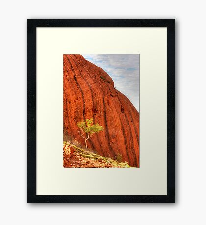 The only tree  Framed Print
