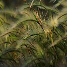 Grass light by Kirstyshots