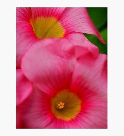 Inner Beauty Photographic Print