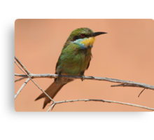 Swallow-tailed Bee-eater Canvas Print