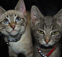 A Tale of Two Kittys by Tori Snow
