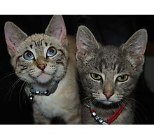 A Tale of Two Kittys Photographic Print