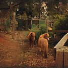 Pemberton Ponies by Elaine Teague