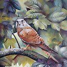 Hawk by Elena Oleniuc