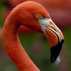 Olé ... Flamingo  by John44