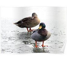 Mr & Mrs Duck Poster