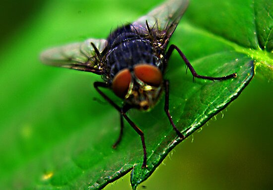 The Fly by Trevor Kersley