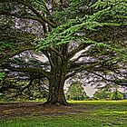 The Brodsworth Tree by Ryan Davison Crisp