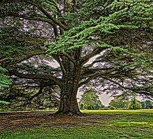 The Brodsworth Tree by Ryan Davison Crisp