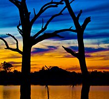 Twin Trees. by John Vandeven