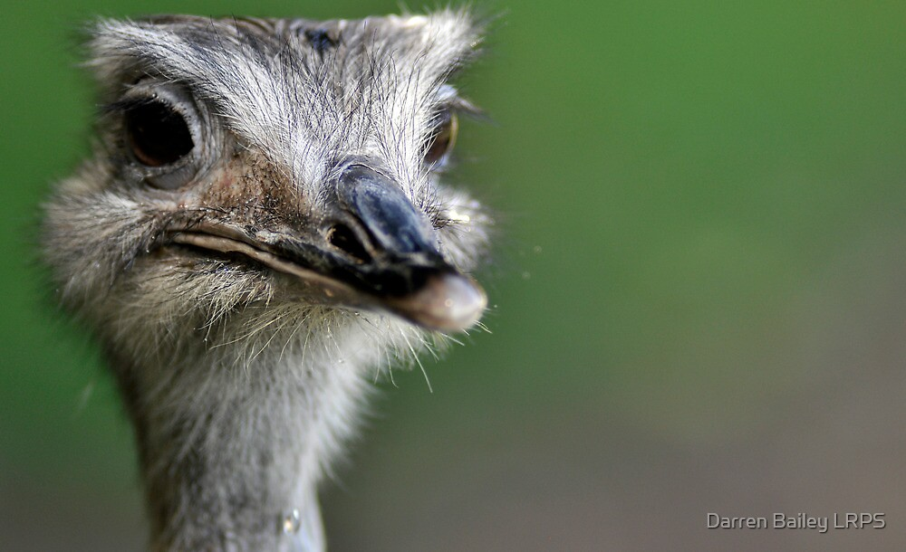 Amusing Emu by Darren Bailey LRPS