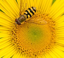 A Golden Plate of Nectar by Sarah-fiona Helme