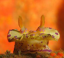 Halifax Nudibranch by Matt-Dowse
