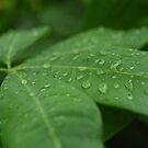 Rain Drops Keep Fallin' On My Leaves... by Brittany Kinney
