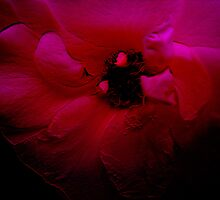 Red Flower. by Vitta