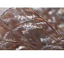 Wind Blown Grass Photographic Print