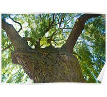 tree climb Poster