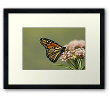 Monarch 2010 Framed Print