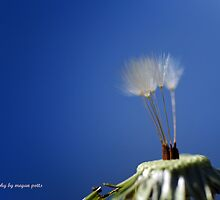 dandilion part 2 by meegs1