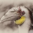 Hornbill by Frank Yuwono