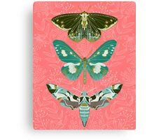 Lepidoptery No. 5 by Andrea Lauren Canvas Print