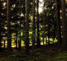 Morning light through the pines by Karen  Betts