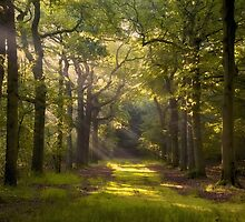 In The Forest by LarsvandeGoor