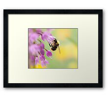 The Nectar Collector Framed Print