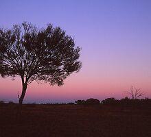 Sunset And A Tree by retsilla