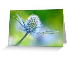 Eryngium Dream Greeting Card