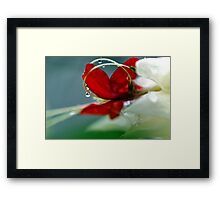 Glory Bower - Clerodendron thomsoniae Framed Print