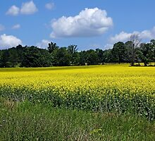 Field of Gold by Debbie Oppermann