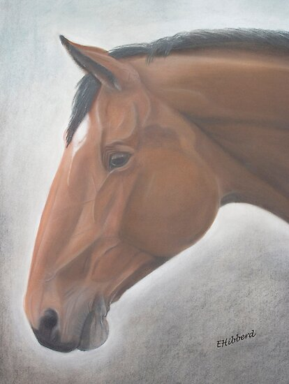 Warmblood Portrait by Elizabeth Hibberd