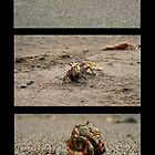 Crabby Beaches by Jessica  Schoepen