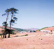 Three Pines Farm, Northern Coastal California by JoeArunski