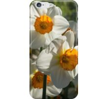 Sunny Side Up - Daffodils Blooming in a Fabulous Spring Garden iPhone Case/Skin