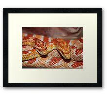 Beauty in Scales Framed Print
